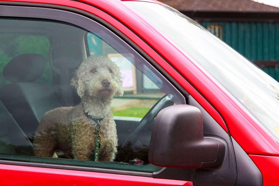 hot-cars-pets
