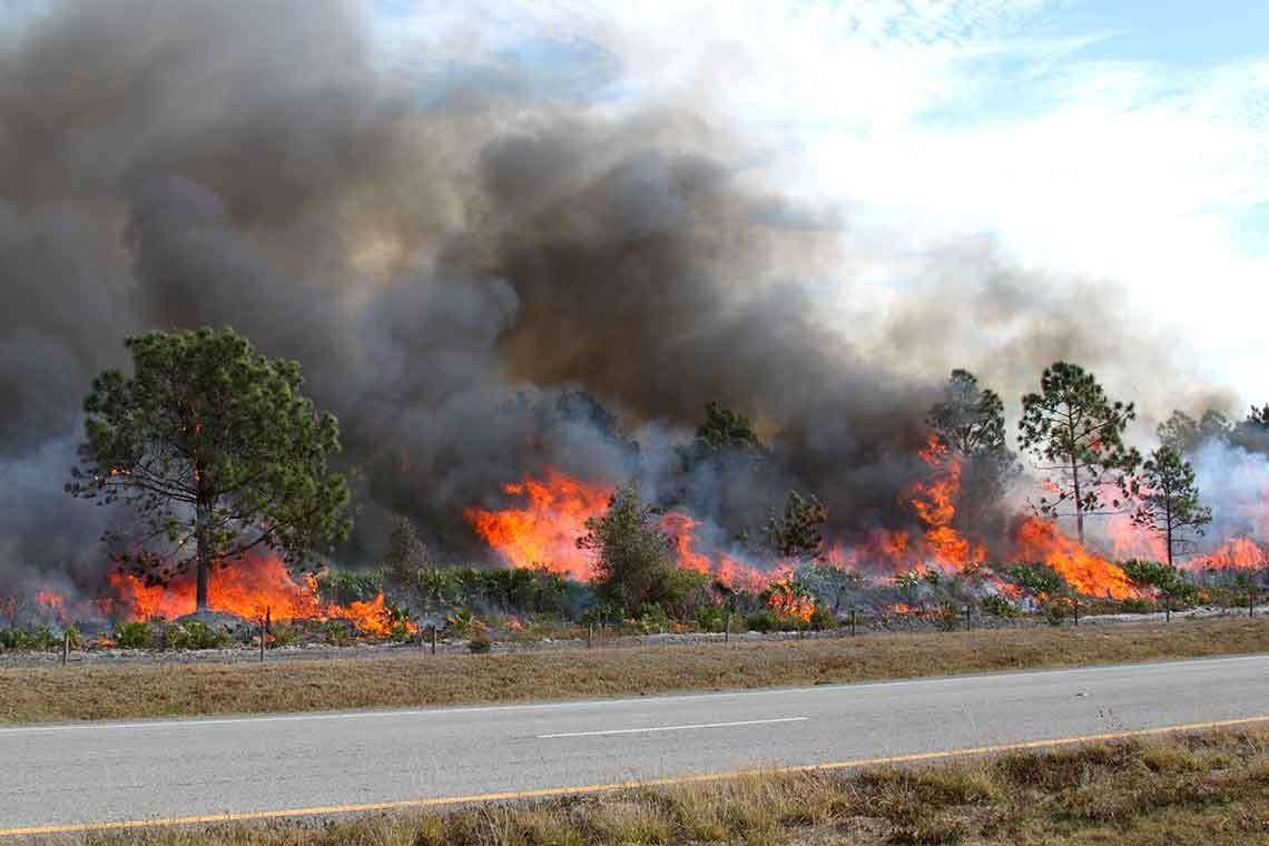 florida-wildfire-season-st-petersburg-photo1